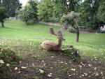 Deer sitting in paddock beside castle