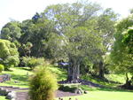 Pretty_trees_in_Cornwall_Park